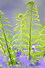 Plants and blue flowers