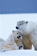 Preview iPhone wallpaper Polar bears family, snow, cold