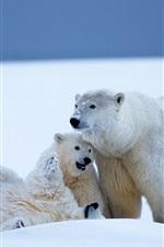 iPhone обои Белые медведи семьи, снег, холод