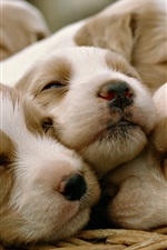 Preview iPhone wallpaper Puppies sleep in basket
