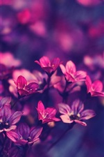 Preview iPhone wallpaper Red little flowers close-up, blurry background