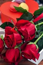 Rosa vermelha flores, bouquet, dom, romântico
