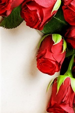 Preview iPhone wallpaper Red rose flowers, romantic, paper