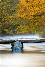 Preview iPhone wallpaper River, trees, stone bridge, autumn
