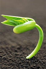 Preview iPhone wallpaper Seed germination, spring