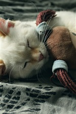 The cat is sleeping with a rag doll