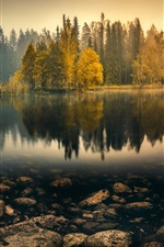 Preview iPhone wallpaper Tranquil morning, lake, trees, reeds, fog