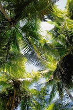 Preview iPhone wallpaper Tropical palm trees