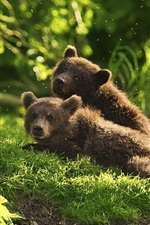 Preview iPhone wallpaper Two bear cubs playful in grass