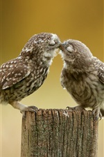 Preview iPhone wallpaper Two cute little owls, stump