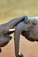 Preview iPhone wallpaper Two elephants playful