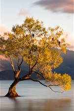 Preview iPhone wallpaper Wanaka, New Zealand, Otago, lake, one tree in water
