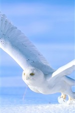 Preview iPhone wallpaper White owl in snow winter