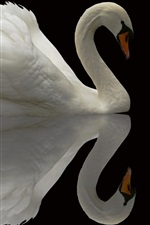Preview iPhone wallpaper White swan, black background, water reflection