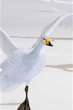 Preview iPhone wallpaper White swan flight