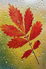 Preview iPhone wallpaper Window, red leaf, glass, raindrops