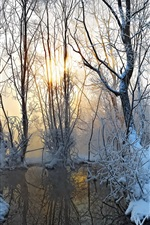 Winter morning, fog, sunrise, trees, water, thick snow