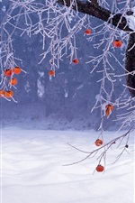 Preview iPhone wallpaper Winter, tree, red fruit, snow