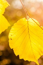 Preview iPhone wallpaper Yellow leaves close-up, bokeh, autumn