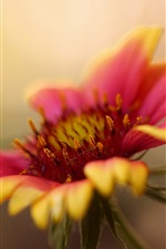 Preview iPhone wallpaper Yellow red petals flower macro photography