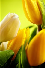 Preview iPhone wallpaper Yellow tulips flowers, green background