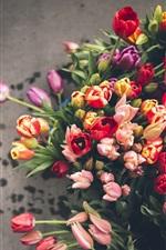 Muitas tulipas, cores diferentes