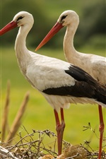 Preview iPhone wallpaper A pair storks