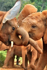Preview iPhone wallpaper African animals, elephants