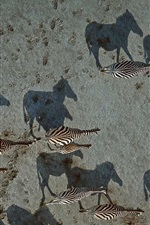 Preview iPhone wallpaper Animal zebra top view