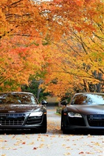 Audi R8 V10 cars front view, autumn, trees