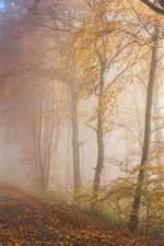 Preview iPhone wallpaper Autumn, forest, trees, fog, road, morning