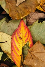 Preview iPhone wallpaper Autumn leaves, colors