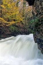 Autumn, tree, stream
