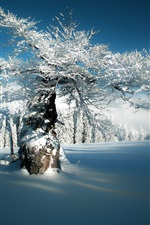 Preview iPhone wallpaper Bayern, Hersbach, Bavaria, Germany, Deer Creek, winter, snow, trees