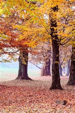 Preview iPhone wallpaper Beautiful autumn park, trees, yellow foliage
