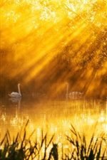 Preview iPhone wallpaper Beautiful morning sun rays, lake, swans, trees
