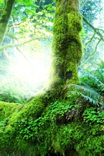 Preview iPhone wallpaper Beautiful natural forest, trees, shrubs, moss, grass, green