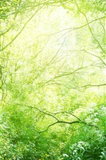 Preview iPhone wallpaper Beautiful nature, grass, trees, bushes, green, sunshine