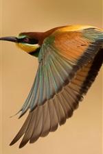Pássaro, vôo, asas