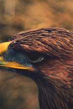 Preview iPhone wallpaper Birds, eagle head close-up, hook beak