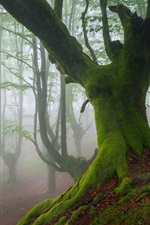 Preview iPhone wallpaper Biscay, Spain, trees, moss, fog, spring
