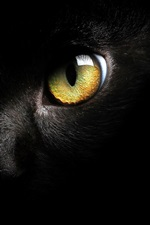 Preview iPhone wallpaper Black cat face, yellow eye