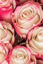 Preview iPhone wallpaper Bouquet, roses, pink yellow petals