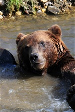 Preview iPhone wallpaper Brown bear bathing in the pond