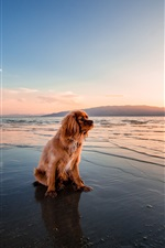 Preview iPhone wallpaper Brown dog sitting at sunset seashore