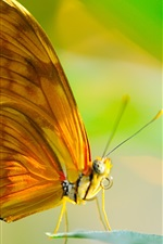 Preview iPhone wallpaper Butterfly, insect, wings