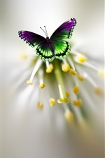 Preview iPhone wallpaper Butterfly, wings, flower, pistil