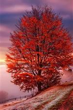 Cárpatos, Ucrânia, amanhecer, névoa, montanhas, árvores, vermelho, folhas, Outono