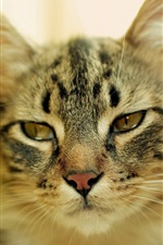 Preview iPhone wallpaper Cat look, face, eyes, blurry background
