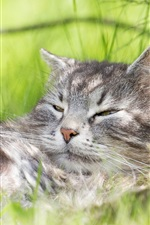 Preview iPhone wallpaper Cat sleep in weed